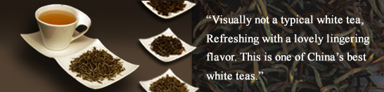 Modern Teaism White Tea
